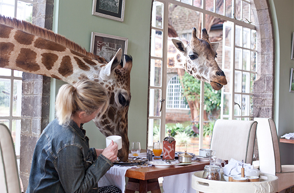 Amazing Hotel Animals