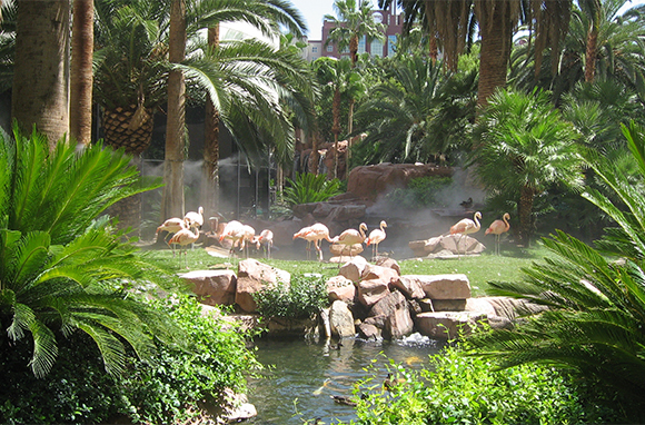 Flamingo, Las Vegas, Nevada