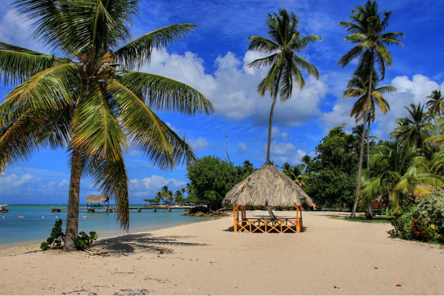 trinidad and tobago palm trees ob the beach.