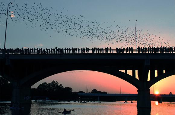 Congress Avenue Bridge Bat Tour, Austin, Texas