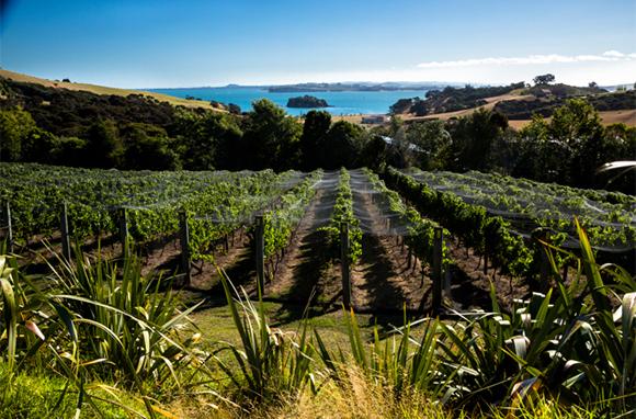 Waiheke Is a Vintner's Paradise