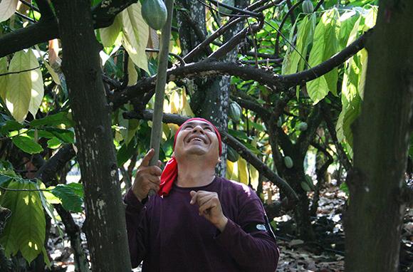 Original Hawaiian Chocolate