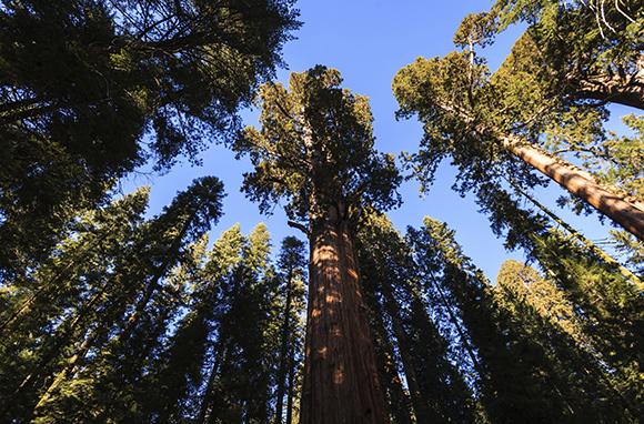 Kings Canyon National Park, California