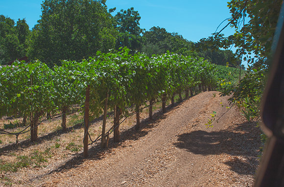 Off-Roading Through the Vineyards