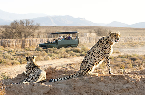 Bucket-List Safaris