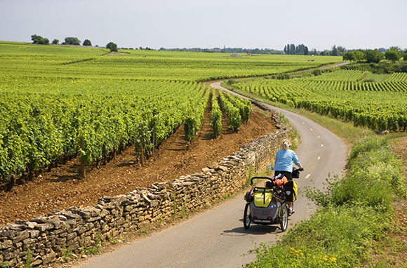 Route des Grands Crus, Burgundy, France