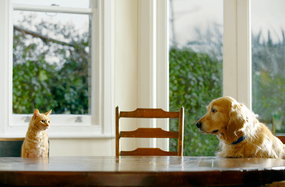 Book House Sitters and Pet Sitters