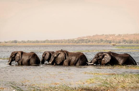 Chobe River, Africa