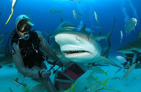 Scuba Diving with Sharks, Bahamas