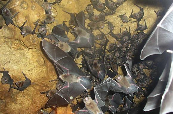 Hiking in a Bat Cave, Trinidad
