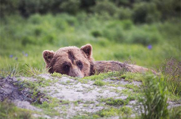 Locals: Alaska Secrets