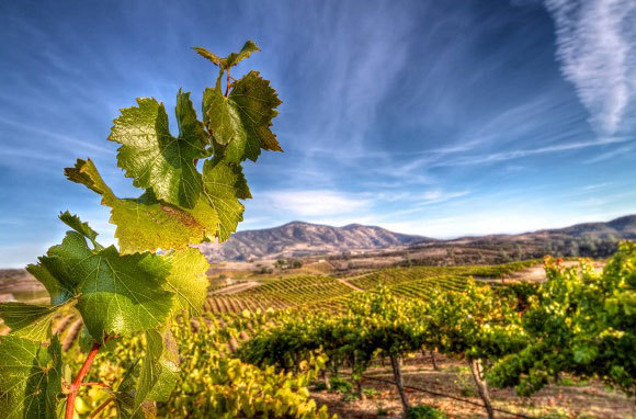 America's Best Wine Destinations for Fall Trips