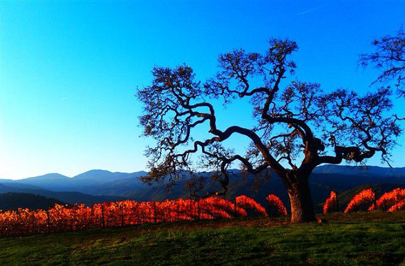 Monterey Wine Country, California