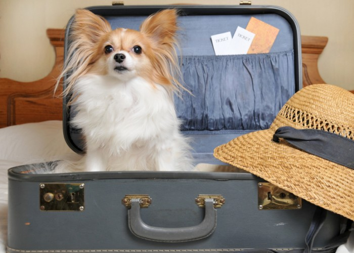 Good Travel Deals for You (and Your Dog)