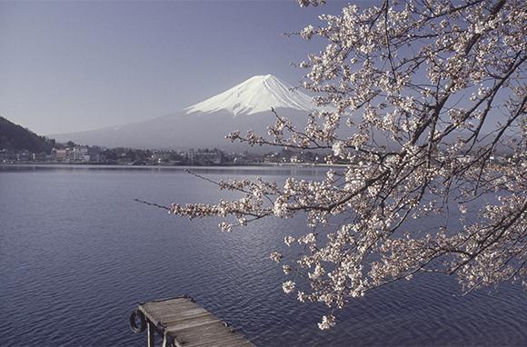 Japan's Ancient Pilgrimage Route