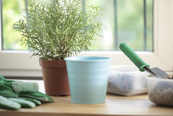 Keep Your Houseplants Alive When You're Traveling