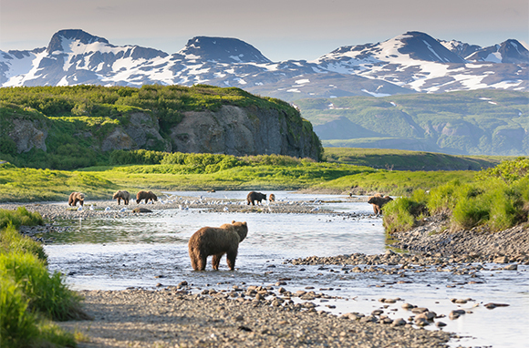 Summer: Katmai National Park & Preserve, Alaska