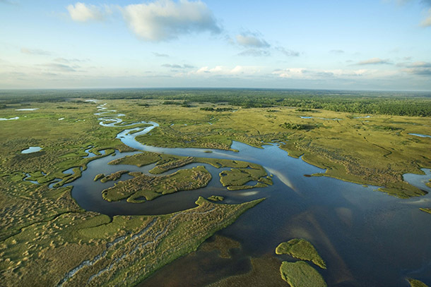 Everglades: Our January National Park of the Month
