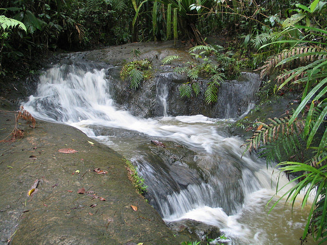 Daily Daydream: Colo-i-Suva Forest Park, Fiji