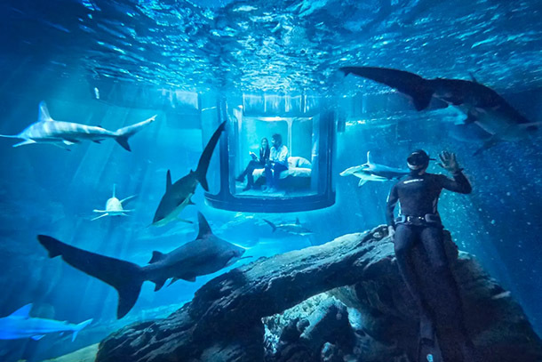 Airbnb Wants You to Sleep in a Shark Tank for a Night