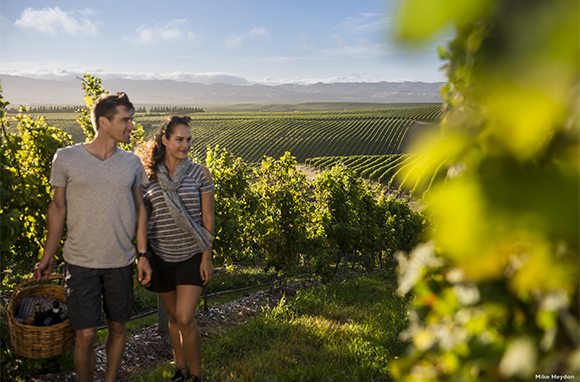 The Marlborough Wine Trail