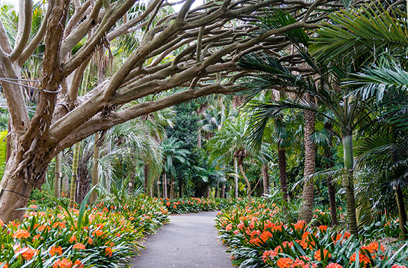 Opera Bar and Royal Botanic Garden