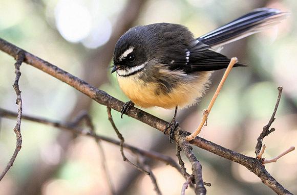 Moturua Bird Sanctuary Island