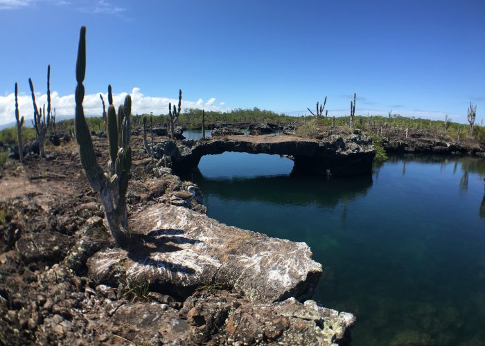 Discover the Galapagos in Less than 60 Seconds