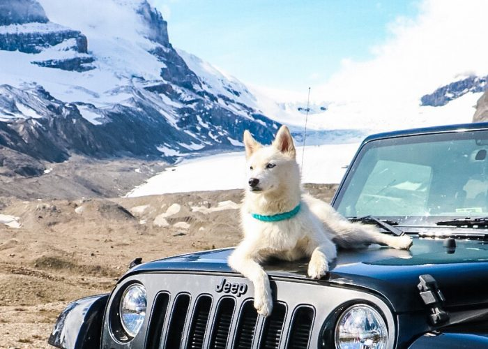 8 Things You Need for a Road Trip with Your Pet
