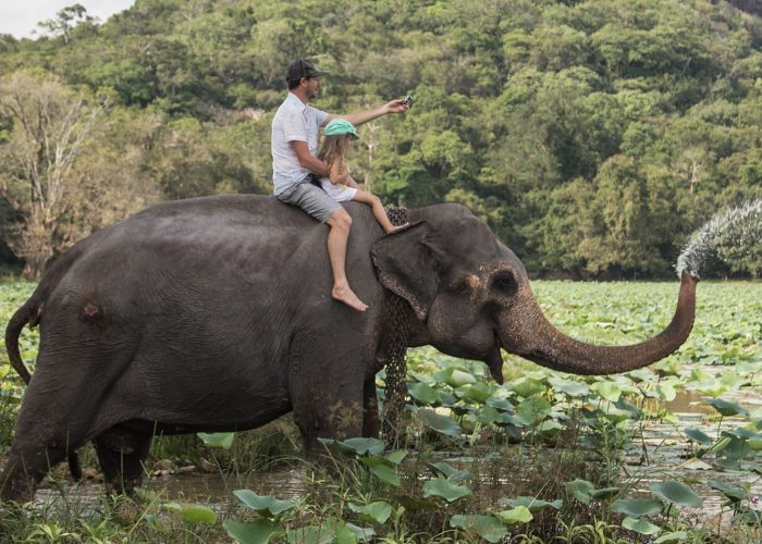 The Problem with All Animal Attractions