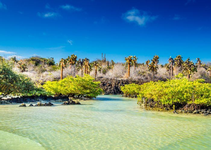 Galapagos: An Island-by-Island Guide