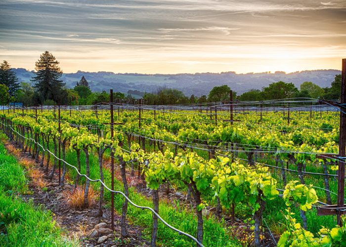 San Francisco & Wine Country: 6-Day Vacations from $869
