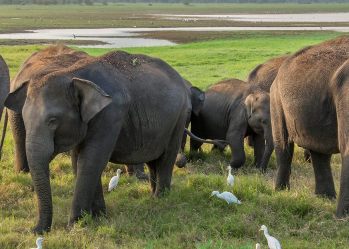 8 Ways to See Wildlife Responsibly When You Travel