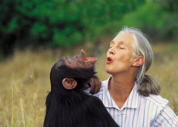G Adventures Launches Partnership with the Jane Goodall Institute