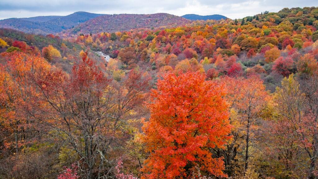 blue-ridge-parkway-fall