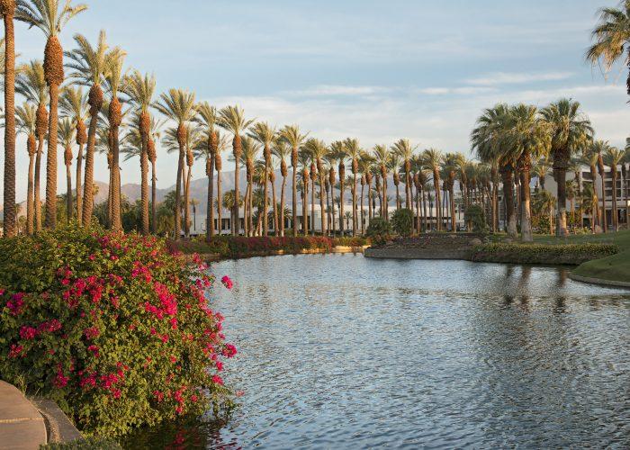 palm trees lake