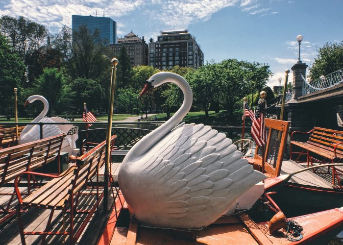 boston swan boat tour