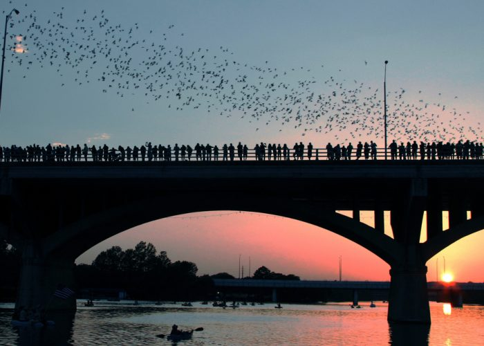 best things to do in austin see bats