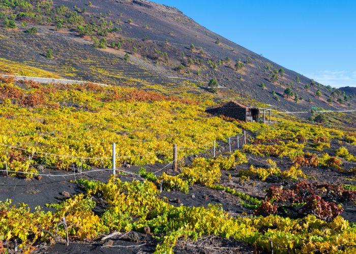 San Antonio Valley Vineyards