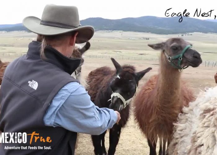 Wild Earth Llama Adventures – A New Mexico True Experience