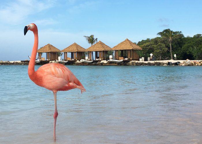 things to do in Aruba flamingo beach