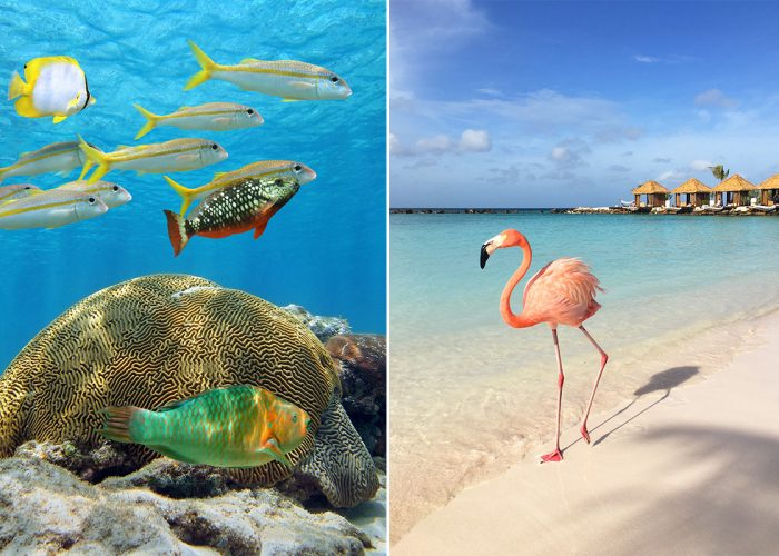 things to do in Aruba wildlife