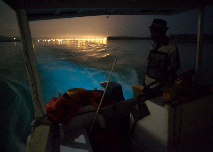 Bioluminescent Bays Puerto Rico