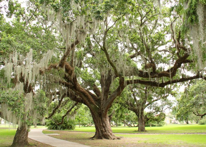 best things to do in new orleans parks