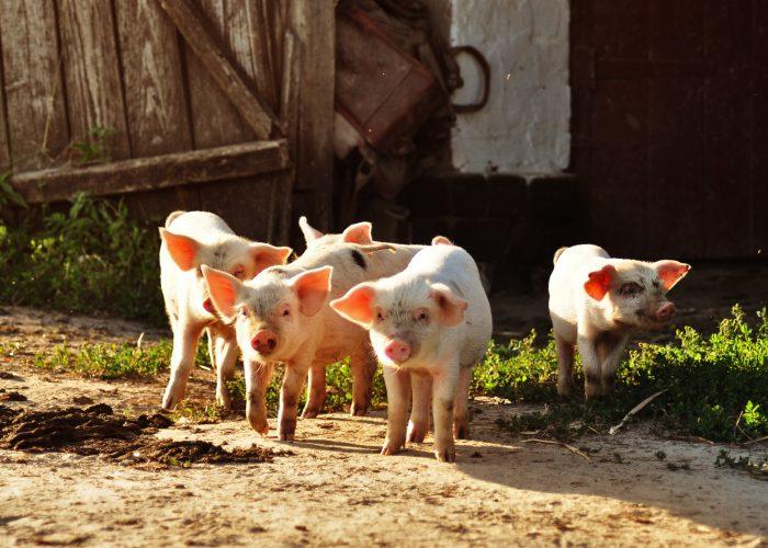 Pork Highway La Ruta del Lechón