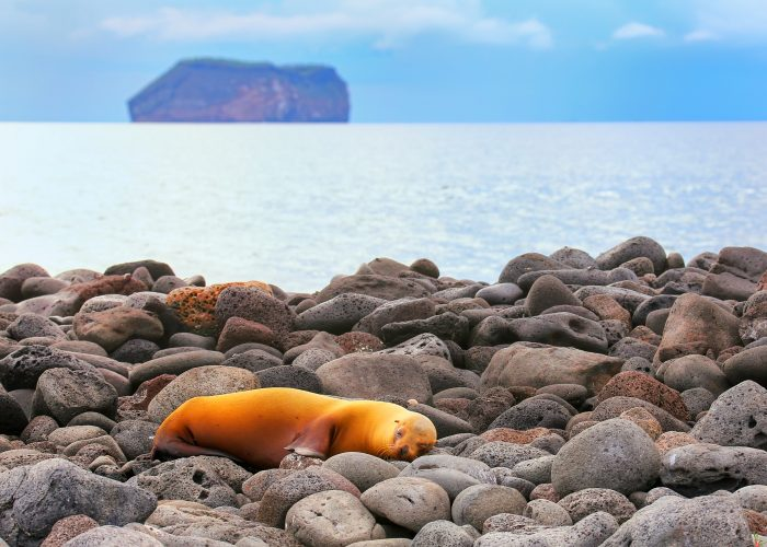 Didn't know budget travel galapagos