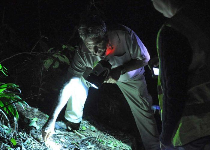 Glow Worm Cave Tour in Australia