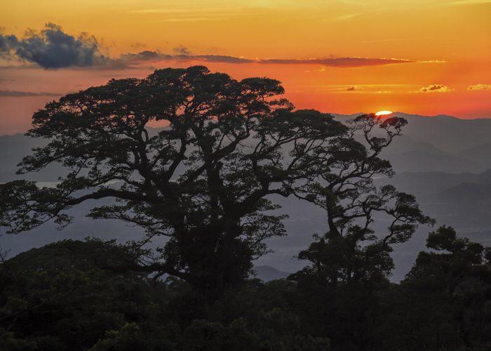 Jungle Night Hike in Costa Rica