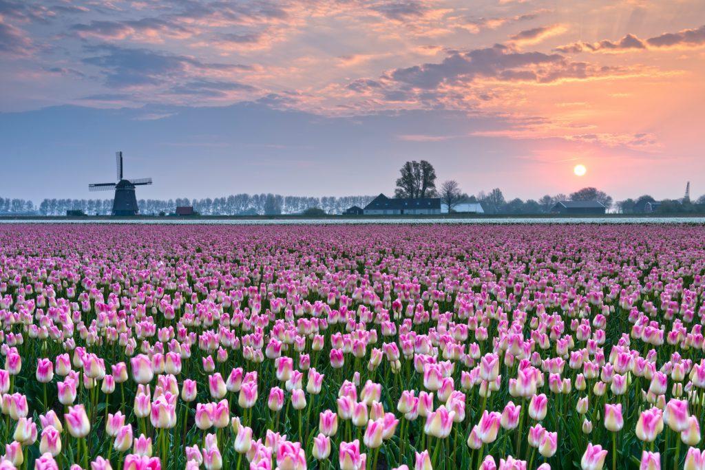 spring flower blooms