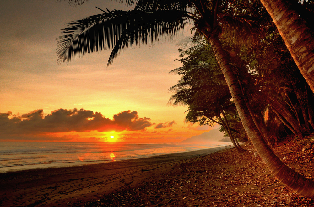 Sun, beach, and trees at corcovado national park